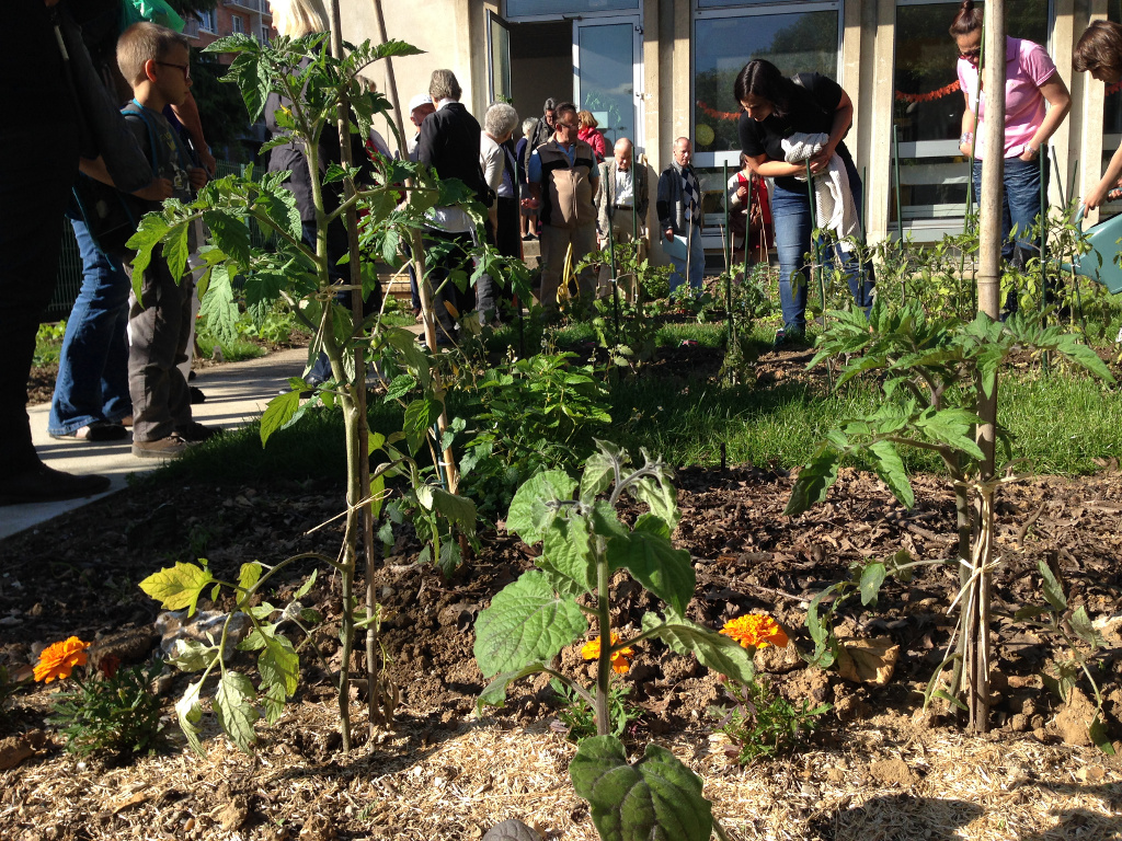 1ères plantations jardins partagés Montrouge